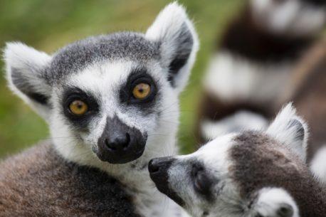 Tour del Madagascar