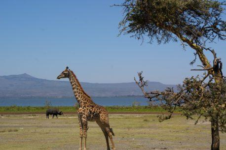 tour Kenya