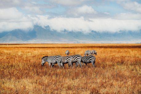 tour Tanzania